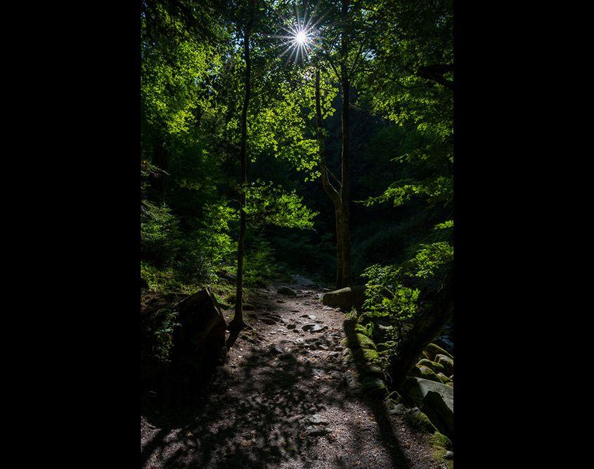 An einem Nachmittag irgendwo im Schwarzwald