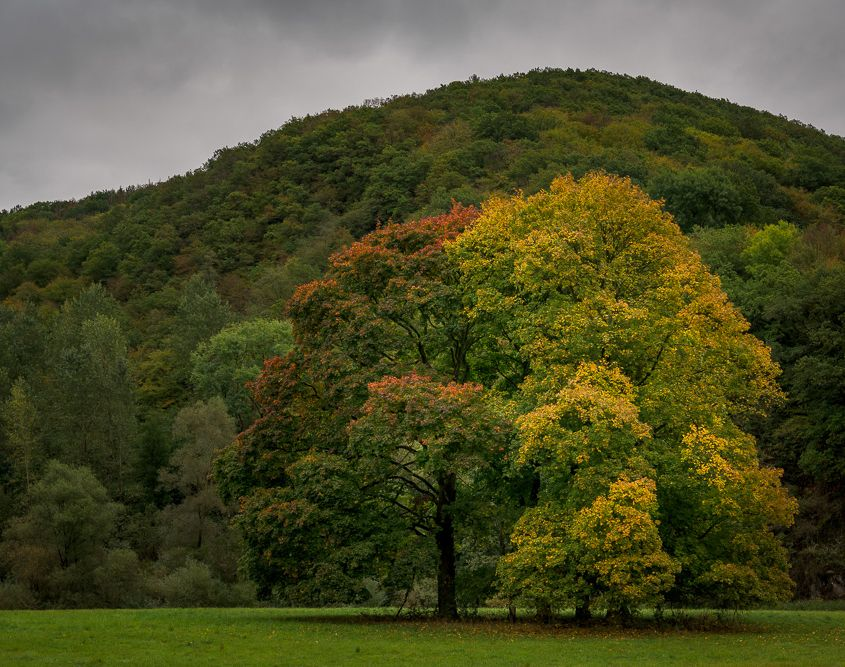 Herbstbäume im Wiedtal