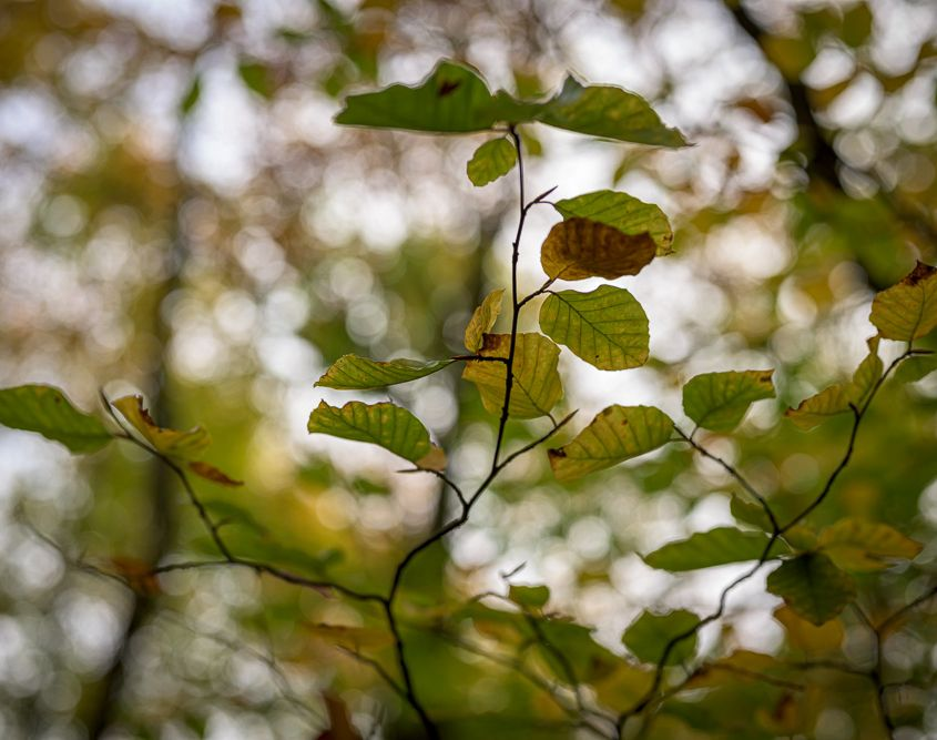 Some leaves