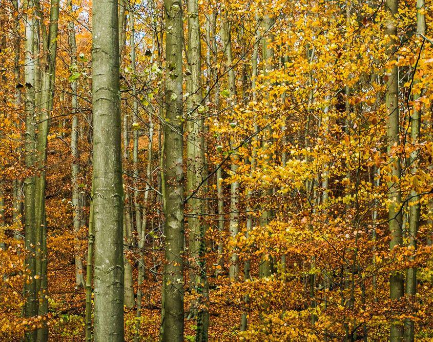 Irgendwo mitten im Herbst