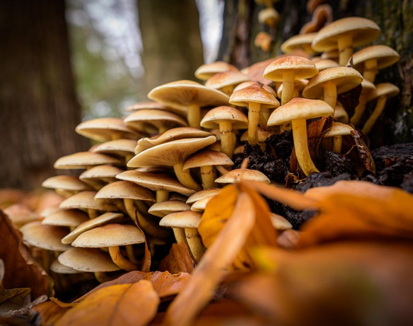 Pilzfamilie am Unteren Weg in Schwandorf