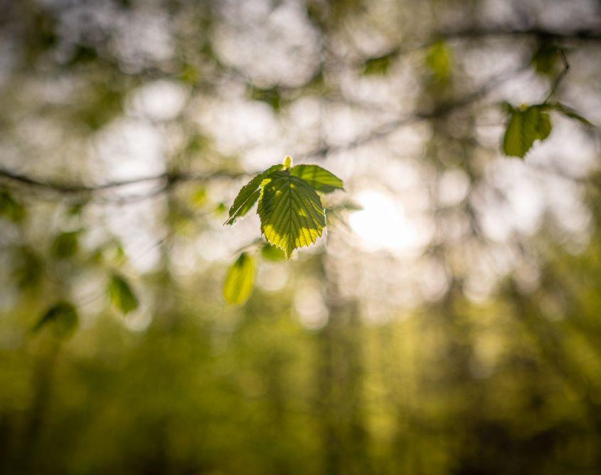 Im Wald, Neuwied