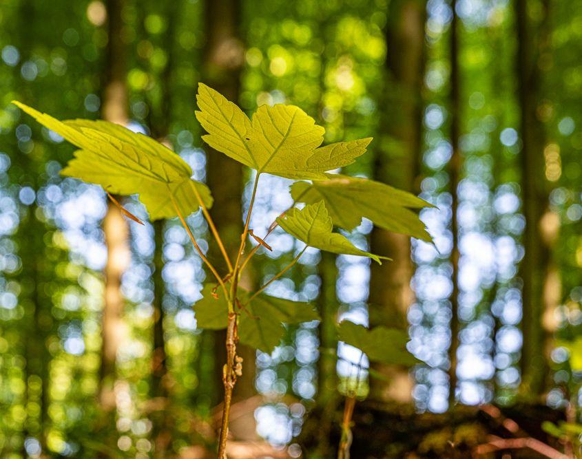 Nachwuchs im Frühlingswald, Höhr-Grenzhausen