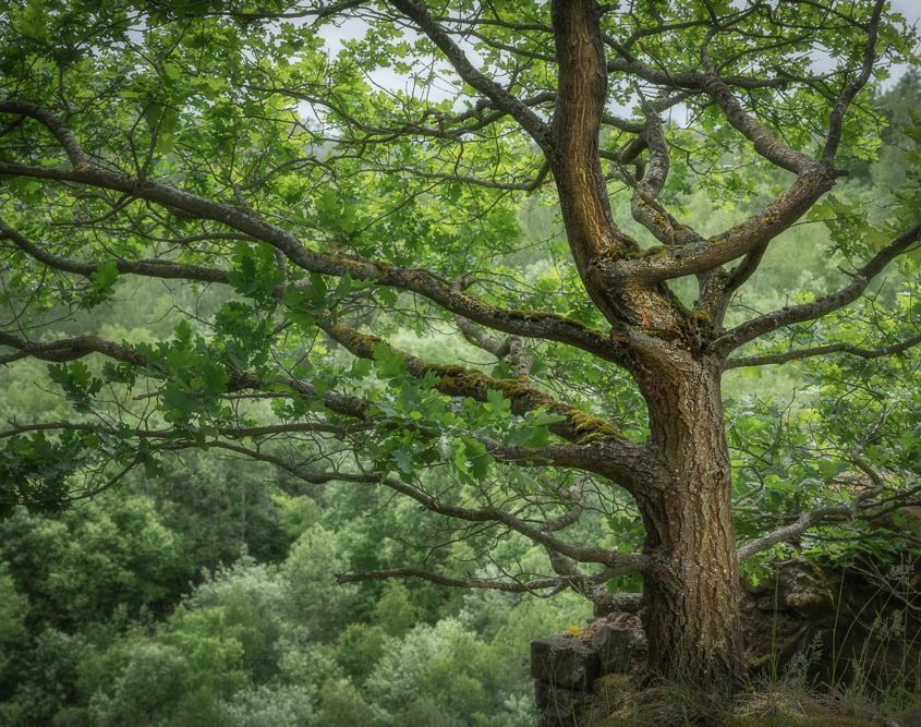Woodland, Mayen
