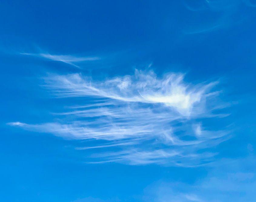 Sky Feathers, Bonn