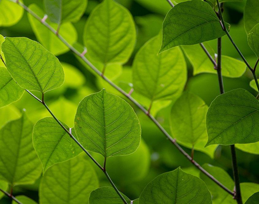 Grün, Kleinmaischeid
