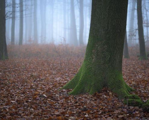 Bild des Monats November 2020: Herbstwald
