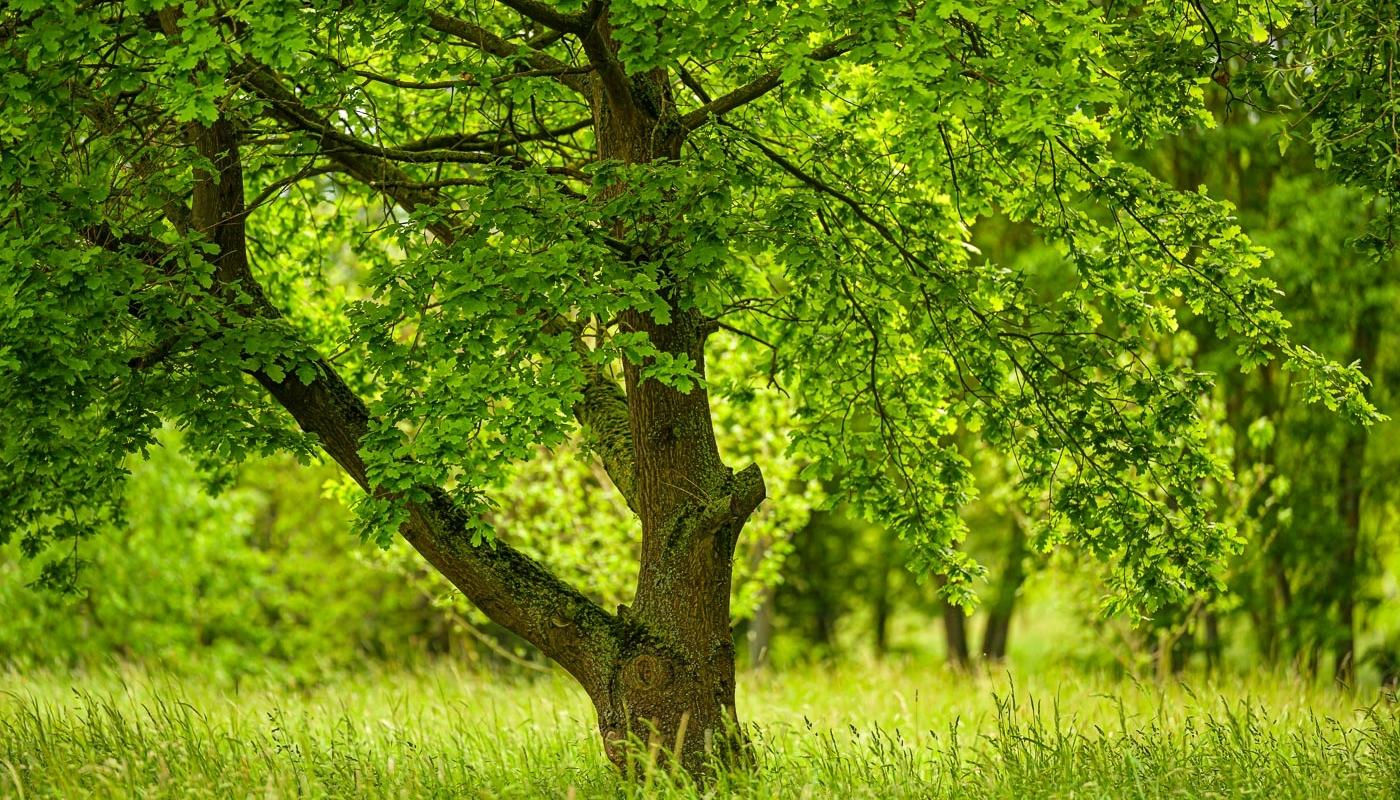 Heimeliges Grün